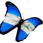15736183-Nicaragua-flag-butterfly-flying-isolated-on-white-background-Stock-Photo